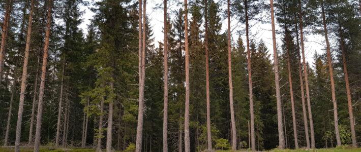 Trærne er ikke bare skog! De er framtida!